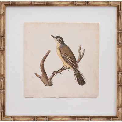 Mirror Image Home Mini Nozeman Bird VI Framed Graphic Art - Perigold
