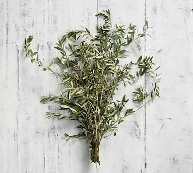 Live Olive Leaves, 3 Bunches - Pottery Barn