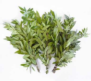 Live Bay Leaves, 3 Bunches - Pottery Barn