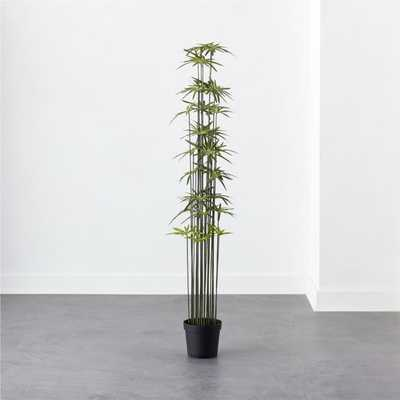 Umbrella Tree 6' - CB2
