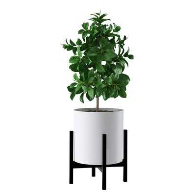 Square Modern Plant Stand - Wayfair