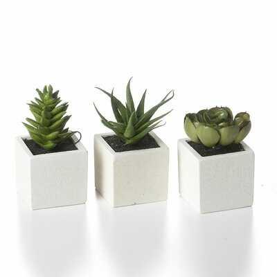 3 Artificial Aloe Succulent in Planter Set - Wayfair
