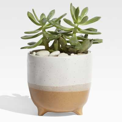 Arley Terracotta Footed Planter - Crate and Barrel