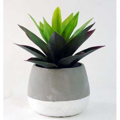 "5"" Artificial Agave Succulent in Pot - Wayfair"