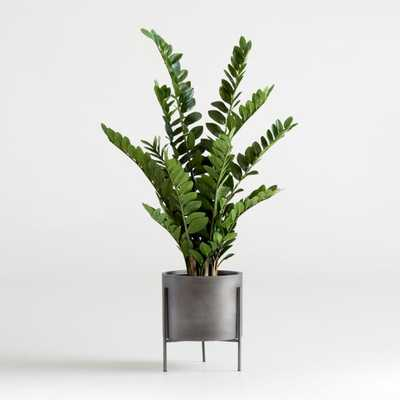 Faux Potted ZZ Plant - Crate and Barrel