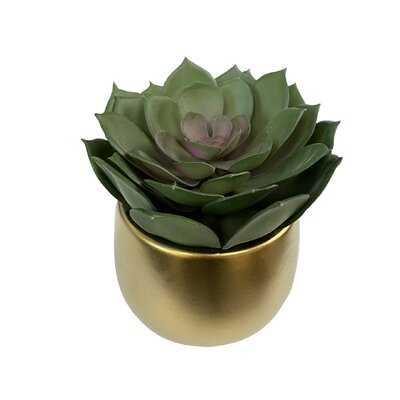 "5.75"" Lifelike Echeveria Succulents In Gold Ceramic Pot - Wayfair"