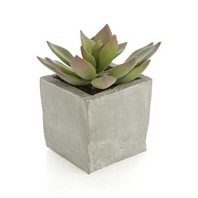 Potted Artificial Short Succulent - Crate and Barrel