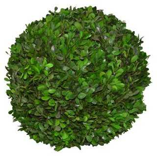 """12"""" Boxwood Topiary Ball, Preserved - One Kings Lane"""