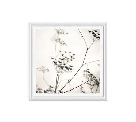"Nature's Drawing Framed Print - 25"" x 25"" - White frame - With mat - Pottery Barn"