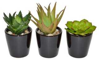 Set of 3 Succulents in Planter, Faux - One Kings Lane