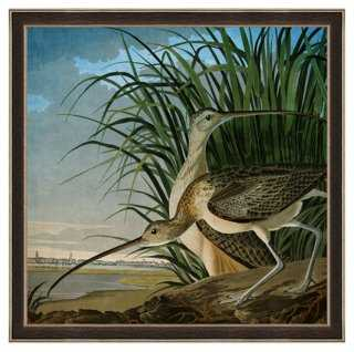 John James Audubon, Curlew - One Kings Lane