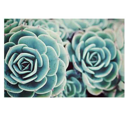SEDUM PLANT BY LUPEN GRAINNE - Pottery Barn