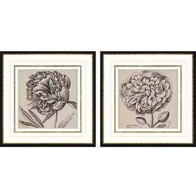 "Graphic Floral I 2 Piece Framed print-26"" - Wayfair"
