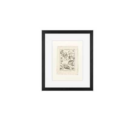 """BOTANICAL PLATE 593 FRAMED PRINT - 11 X 13"""" - Framed - Pottery Barn"""