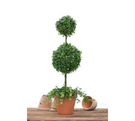 Live Ivy Classic Topiary -  Double Ball Ivy - Pottery Barn
