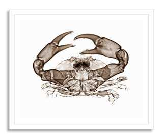 Bert Myers, X-ray of Crab - Framed - One Kings Lane