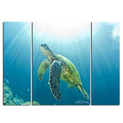 'Sea Turtle'  3 Piece Photographic Print on Wrapped Canvas Set (unframed) - AllModern