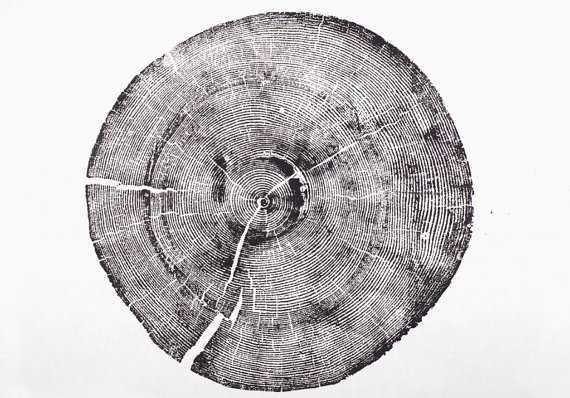 Rock Canyon Pine. Original Print - 18x24 - Unframed - Etsy