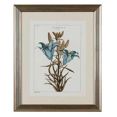 "Buchoz Botanical Art - Print 6 - 23"" x 19""-Brushed Antique Silver Frame with Cream Mat - Ballard Designs"