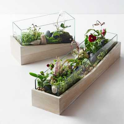 Roar + Rabbit Angled Wood Terrariums - Long - West Elm