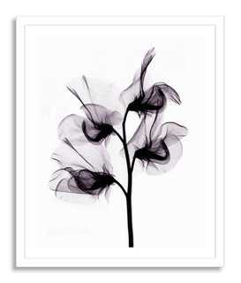 Bert Myers, X-ray of Sweet Pea Flowers - One Kings Lane