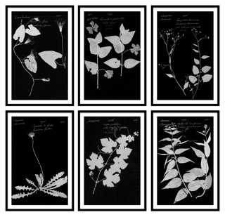 Black & White Botanical Bundle - One Kings Lane