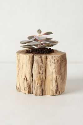 Tree Trunk Planter - Anthropologie