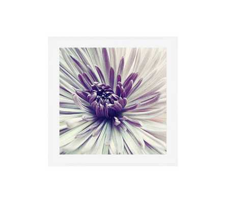 "Purple Star Framed Print by Lupen Grainne - 25"" x 25"" - Pottery Barn"