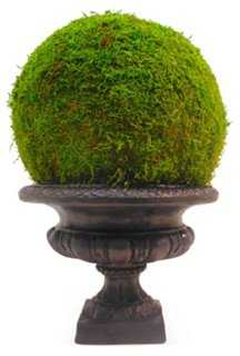 "18"" Moss Ball in Urn, Preserved - One Kings Lane"