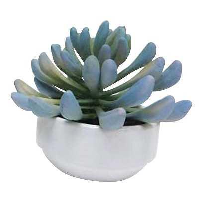 """5"""" Succulent in Ceramic Pot - Target"""