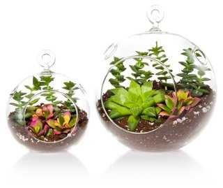 Succulent Terrarium Duo Kit - One Kings Lane