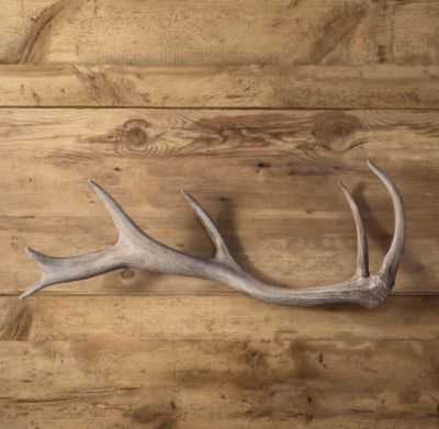 DEER ANTLER CAST IN RESIN - RH