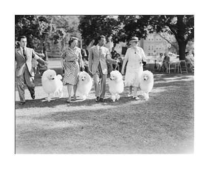 Poodle Club - Photos.com by Getty Images