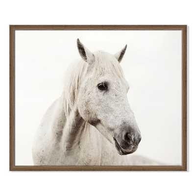 Framed Print - Horse II - West Elm
