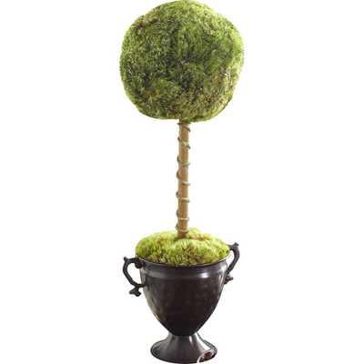Latham Preserved Moss Single Topiary - Birch Lane