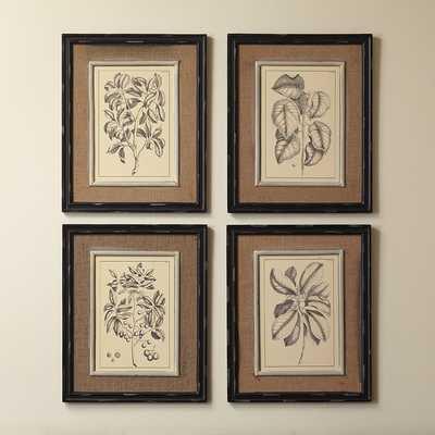 """Botanic Wall Art - 21"""" H x 17"""" W - Antique-black frame - Birch Lane"""