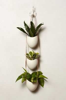Leather-Latched Wall Planter - Anthropologie