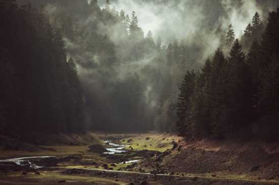 Foggy Forest Creek - unframed - Society6