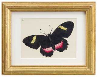 Hand-Painted Butterfly, C. 1830 - One Kings Lane