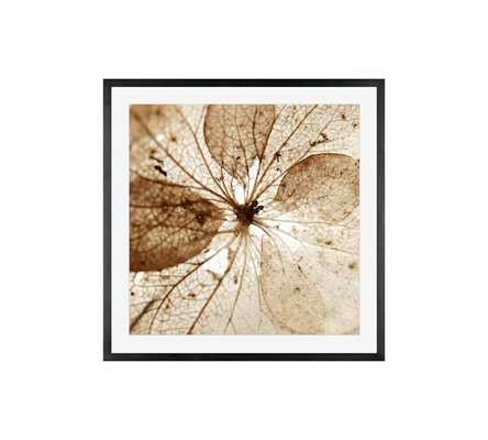 Dried Hydrangea Flower Framed Print by Lupen Grainne - Pottery Barn