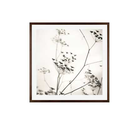"""NATURE'S DRAWING FRAMED PRINT  - 25 X 25"""" - Pottery Barn"""