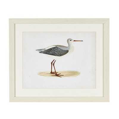"Morris Seabird Whitewash Framed Art - Print I - 19 3/4""H X 23 3/4""W - Ballard Designs"