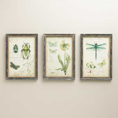 """Curiosities Wall Art, Set of 3-9.38""""W x 1""""D x 13""""H each-Framed - World Market/Cost Plus"""