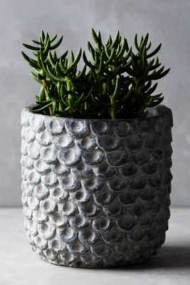Scalloped Cement Pot-Medium-Grey - Anthropologie