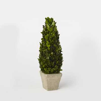 Boxwood Trees - Medium - West Elm