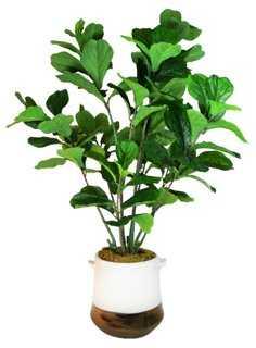 """54"""" Fiddle-Leaf Tree in Planter, Faux - One Kings Lane"""