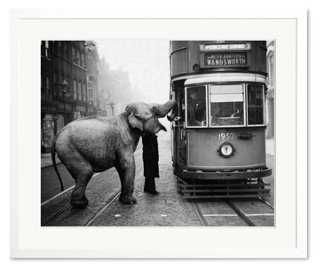"Streetcar Driver Feeds Elephant-20"" x 24""-Framed - One Kings Lane"