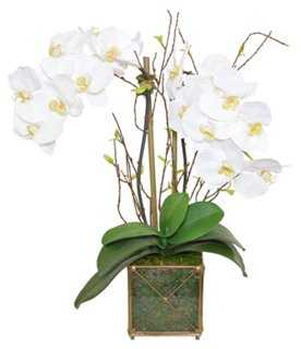 Phal Orchid Arrangement, Faux - One Kings Lane