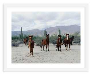 Kevin Russ, Horses in the Desert - One Kings Lane