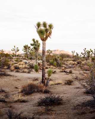 JOSHUA TREE 2 BY ALEX CAVE - unframed - shoppe.amberinteriordesign.com